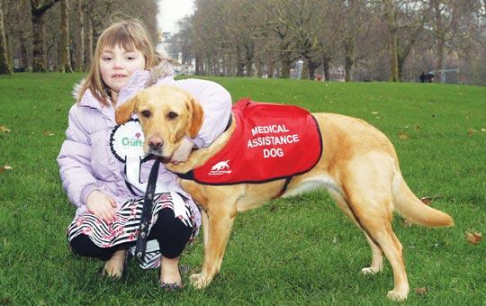 Diabetic Alert Dogs For Sale Uk