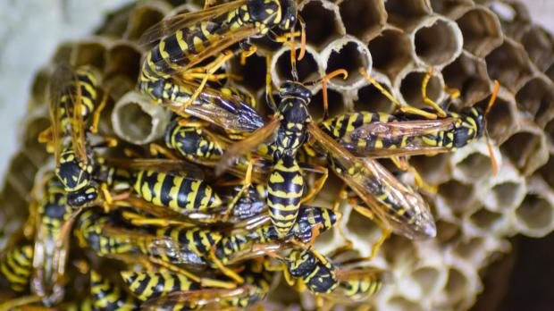 Man Sets House On Fire While Trying To Burn Wasp Nest