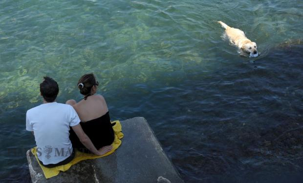 A dog swims back to it's owners after retrieving a ball from the water in St Julian's bay on September 3. Photo: Matthew Mirabelli