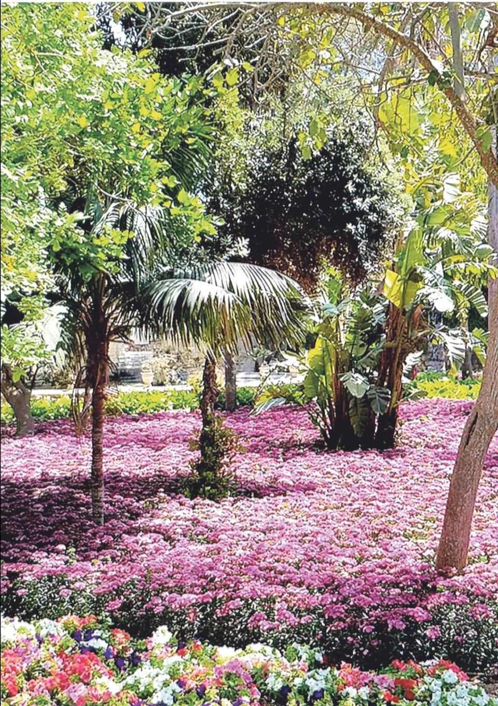 A bed of seasonal plants