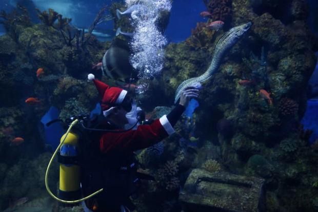 A diver dressed as Santa Claus feeds fish inside a fish tank at the Malta National Aquarium in Qawra on December 14. Photo: Darrin Zammit Lupi