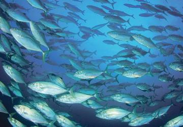 Relocation of pens 'reduced tuna size'