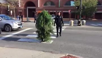 Watch: Tree impersonator arrested