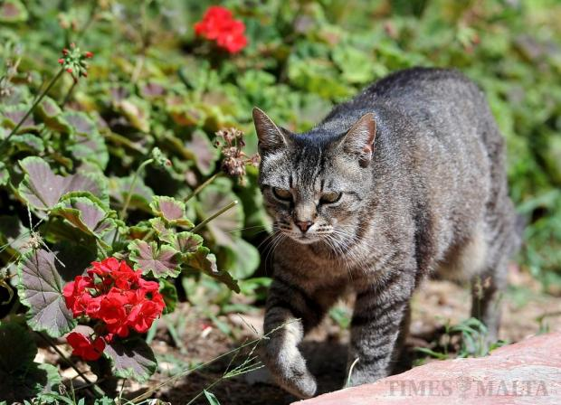 A cat prowls San Anton Gardens on July 6. Photo: Chris Sant Fournier