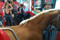 'Why the long face?' - Train company jests after horse brought onto train