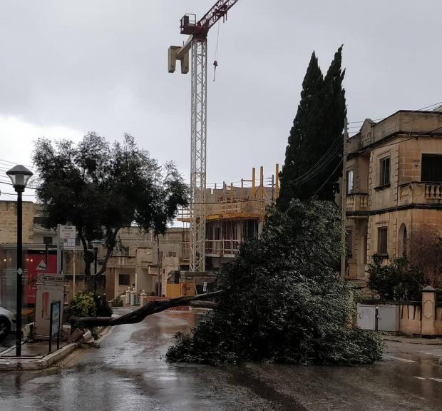 A tree blocking the road next to the bus stop in Triq Ta' l-Ibrag corner. Photo: Malcolm Naudi