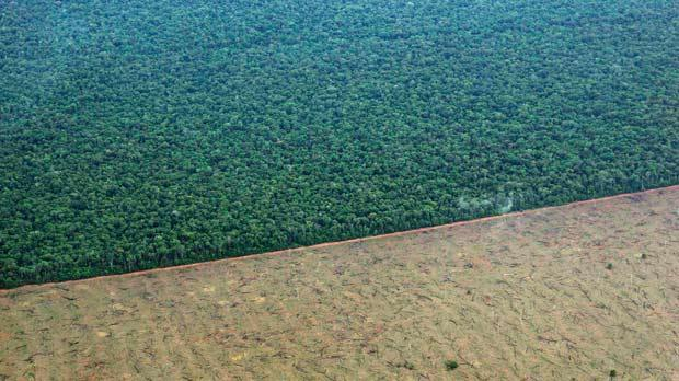 A tract of Amazon jungle recently cleared by loggers and farmers, in the Xingu Indigenous Park. Photo: Reuters/Rainforest Foundation Norway