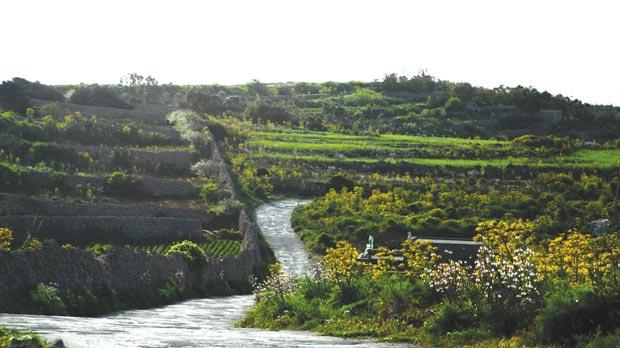 A winding road through terraced fields in Dingli. Farmers help to keep the landscape green.