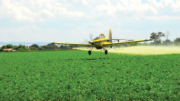 A plane spraying a potato field to guard against Late Blight.