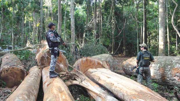 Members of Ibama and the Para State police inspecting logs discovered during Operation Labareda in August 2012.