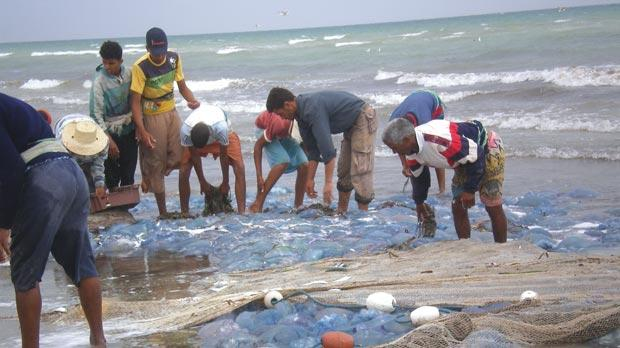 There is a very real prospect of jellyfish having a negative impact on local fisheries, as this photo of Tunisian fishermen illustrates. Photo: Prof. Nejib Daly