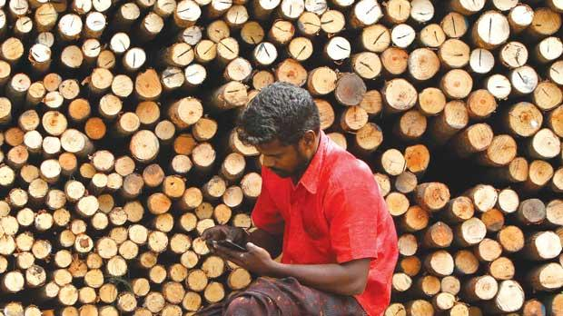 A worker uses his mobile phone as he sits in front of logs of wood for sale at a warehouse in the southern Indian city of Chennai. Photo: Reuters/Babu