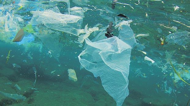 tiny bits plastic harm fish
