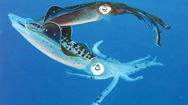 Sex with a squid