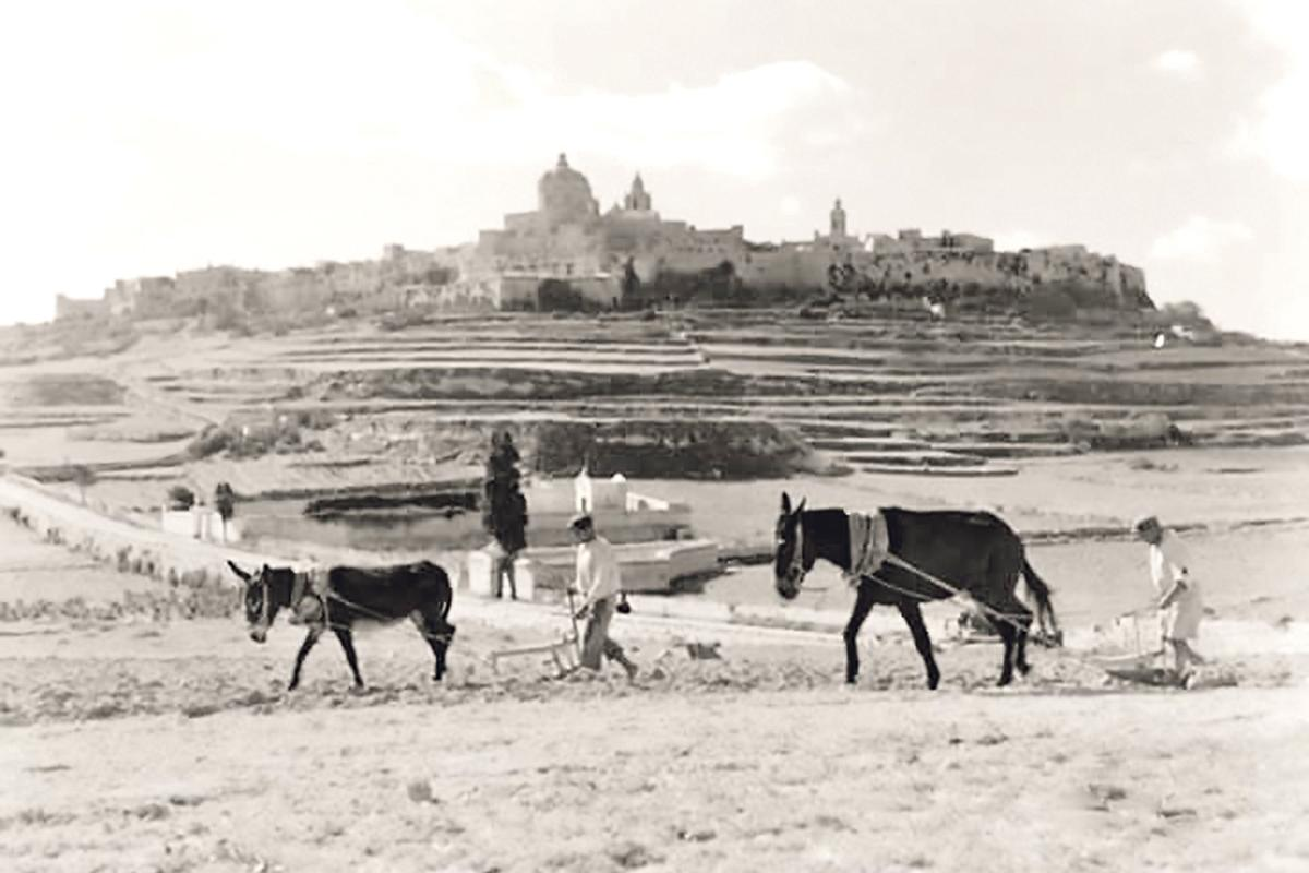 Farmers working the land below Mdina.