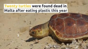 Watch: Plastics have killed 20 turtles so far this year