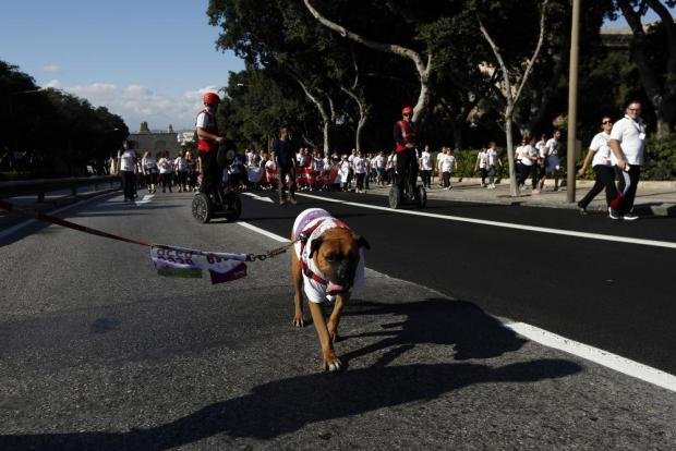 A dog on a lead takes part in the President's Solidarity Fun Run 2015 in Floriana, enroute to Valletta, on November 15. Photo: Darrin Zammit Lupi