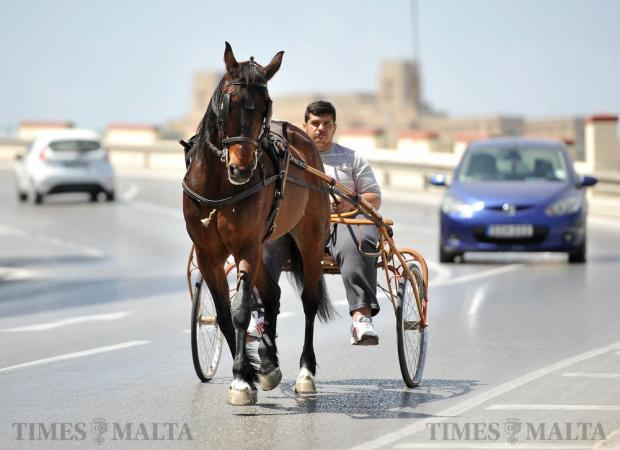 A horse and driver trot along on the Valletta ring road on April 25. Photo: Chris Sant Fournier