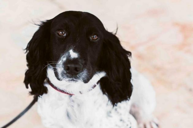 Peter the dog sniffs out €233,000 in undeclared cash at airport