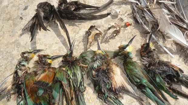 Pigeon Religion - Dead Boss