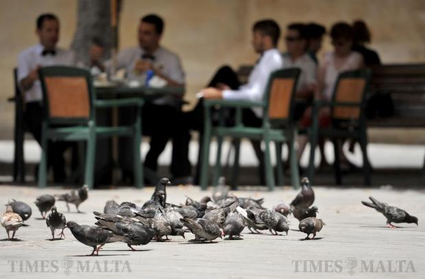 Pigeons and waiters have a snack at Pjazza Regina in Valletta on July 6. Photo: Chris Sant Fournier