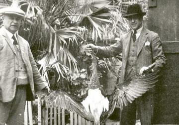 When killing storks was considered a prize catch