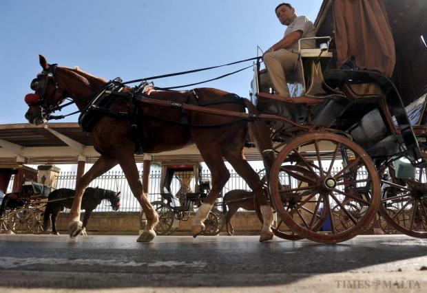 A karozzin passes other horse-drawn carriages at the Grand Harbour in Valletta on October 28. Photo: Chris Sant Fournier