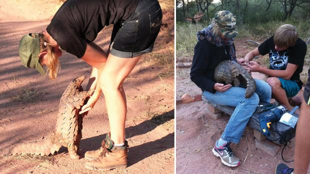 Maria Diekmann with Katiti, the Cape Pangolin. Right: Diekmann and a Rest volunteer fitting a pangolin with a transmitter before releasing it back in the wild. Photos: Maria Diekmann