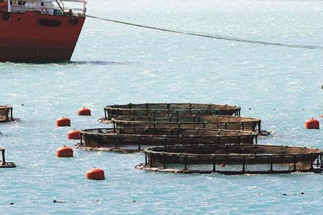 Aquaculture, tuna farming declined 29% last year