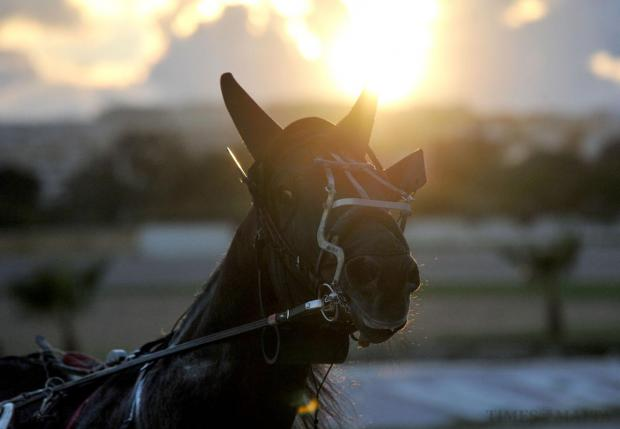 A race horse warms up before the 'Premier' race at the Marsa race course in Marsa on December 8. Photo: Chris Sant Fournier