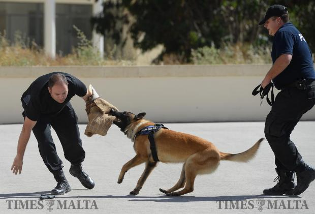 A Belgian shepherd demonstrates his skills during a ceremony where five dogs, all siblings, were welcomed into the Police force in the rank of Sergeant during a ceremony in Ta Kandja on May 9. Photo: Matthew Mirabelli