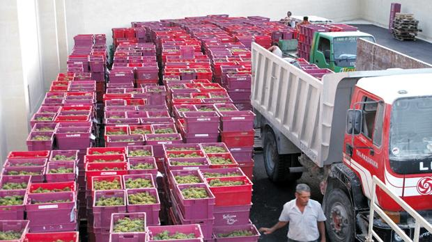 Delicata ends grape pressing - timesofmalta.com
