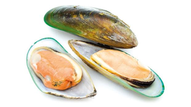 Image result for green lip mussels