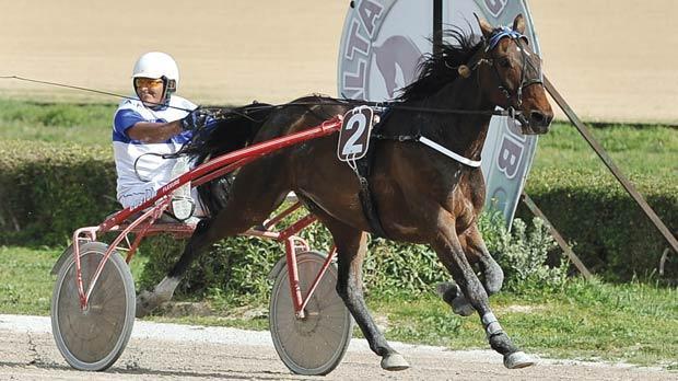 Andrew Farrugia guiding Quiqui Gaillard to victory, yesterday. Photo: Chris Sant Fournier