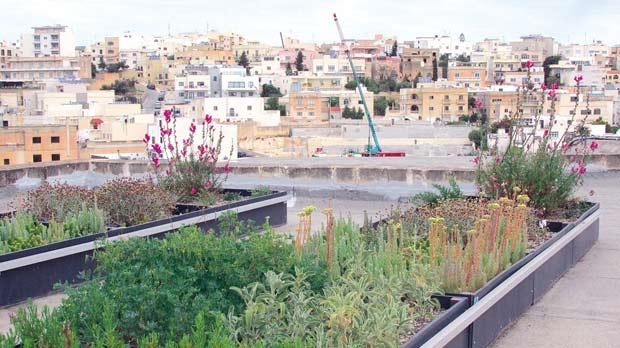 The LifeMedGreenRoof project at the University of Malta. Photo: Antoine Gatt and Vince Morris.