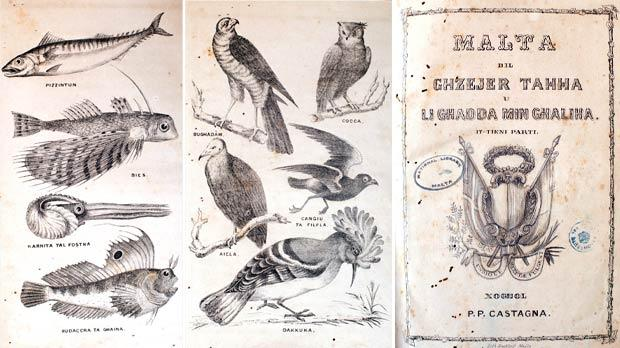 Left: Some fish species. Some bird species. Right: Front page of Castagna's book.