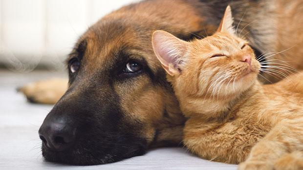 Dogs and cats have always been the most popular pets by far.
