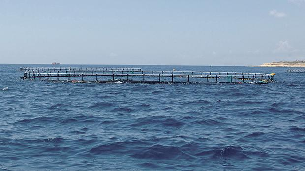 Fish farms were at the centre of controversy last summer after vociferous complaints over large amounts of oily slime.
