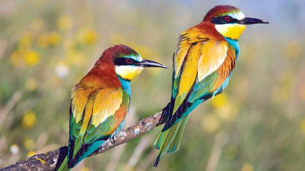 Mr D'Andria Hunt saw bee-eaters heading out to sea without a single shot being fired last week.