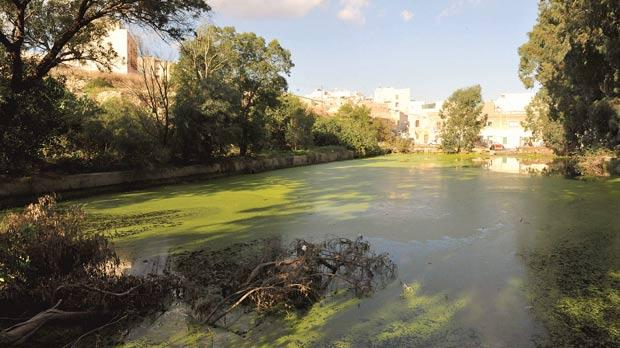 Msida reservoir: a breeding ground for mosquitoes.