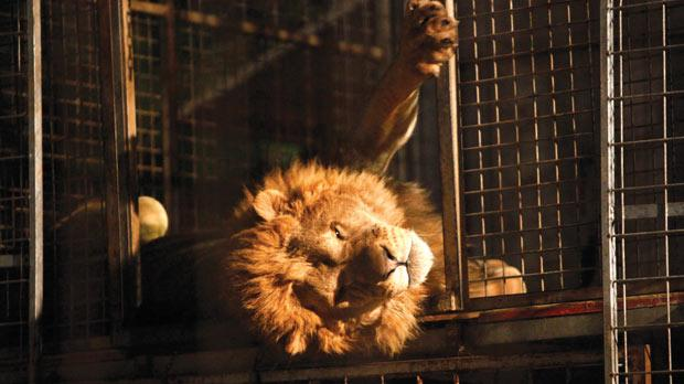 The Animal Rights Coalition wants political parties to ban animal circuses. Photo: Darrin Zammit Lupi