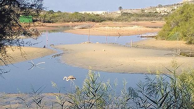 The Għadira Nature Reserve in Mellieħa
