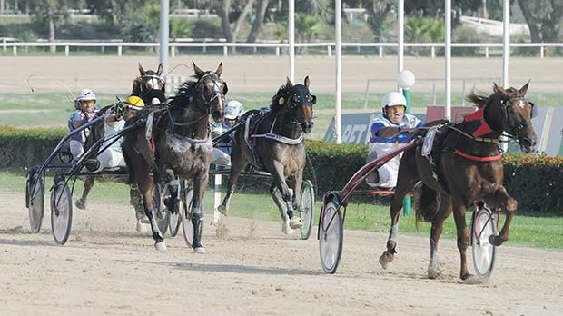 Sage De Gueriniere sprints to victory during a President's Cup heat at the Marsa Racetrack, yesterday. Photo: Steve Zammit Lupi