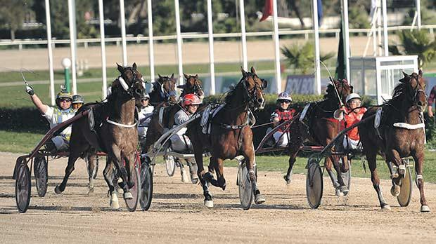 Ourasi Diams (no. 6) on his way to winning the class Premier race at the Marsa racetrack yesterday. Photo: Chris Sant Fournier