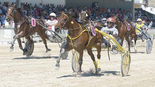 Reprise Arriba (no.4) winning the Gold Class race. Photo:Matthew Mirabelli
