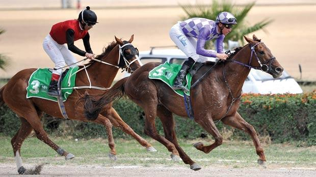 Timolin (right) winning yesterday's flat race at the Marsa Racetrack. Photo: Chris Sant Fournier