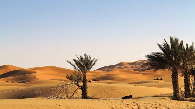Other camel caravans carry tourists around the dunes.
