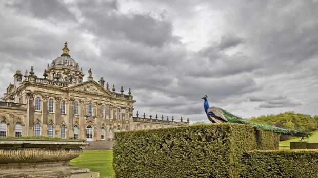 A peacock admires Castle Howard.