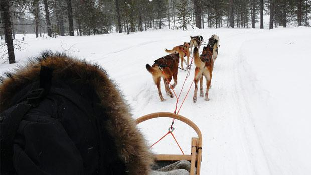 Dogsledding in Finland is exhilarating.