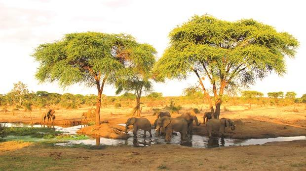 In winter's dry season over 100,000 elephants migrate south and east to Botswana. Photo: Stephen Bailey
